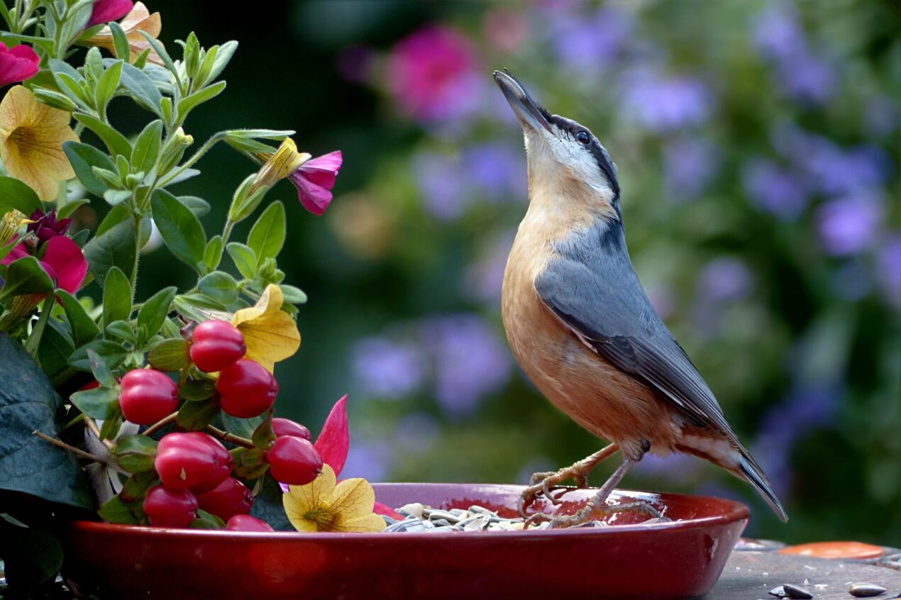 Are you birds not liking the perfect bird feeder you have in your backyard? We share the backyard bird feeding mistakes most people make here.