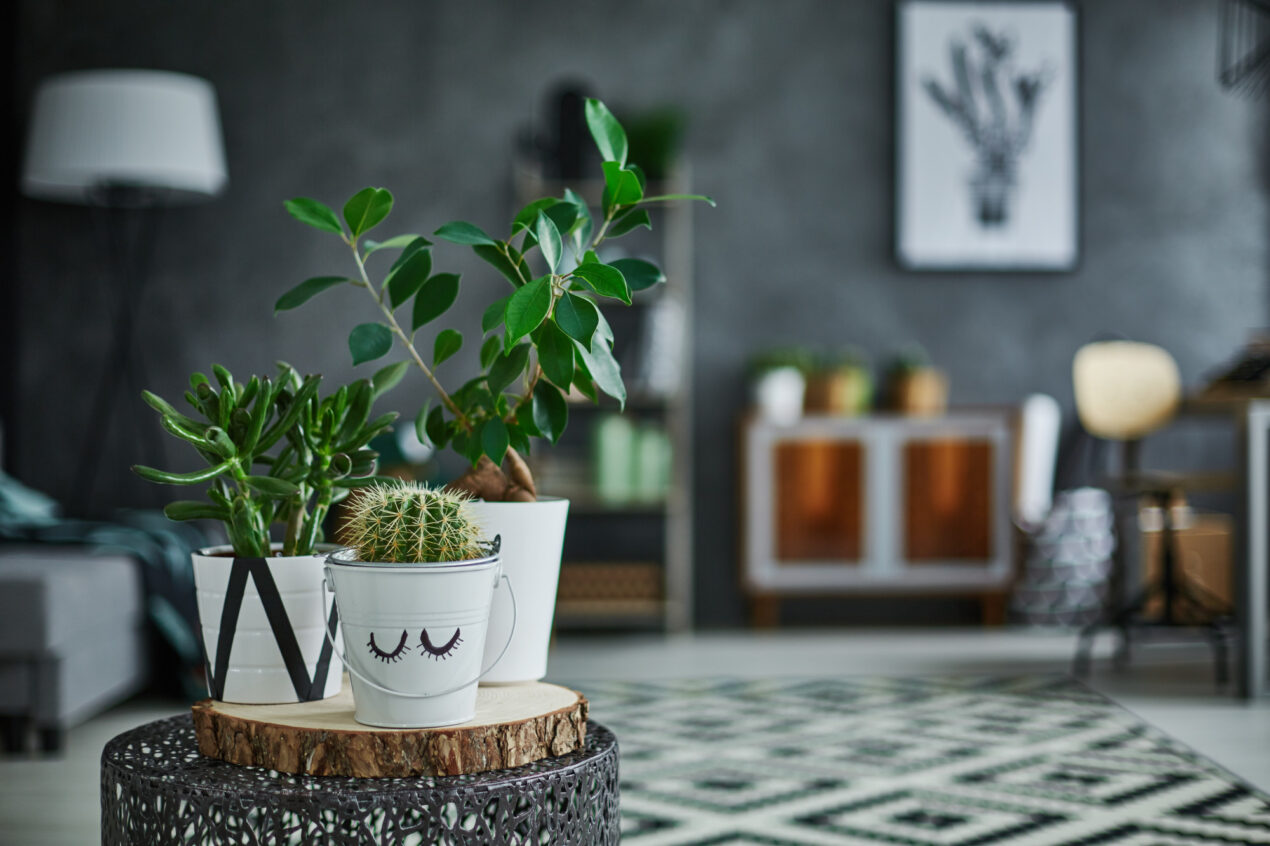 Houseplants can help boost productivity, fight off illness, and improve air quality. Learn more about the surprising health benefits of houseplants here.
